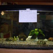 Das jämmerliche Aquarium